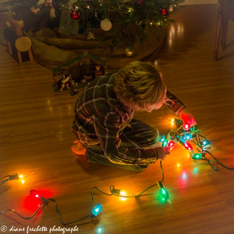 lou-and-christmas-lights-5